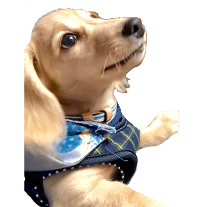 Cleo Daily Sticker Puppy Era messages sticker-6