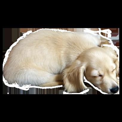 Cleo Daily Sticker Puppy Era messages sticker-11