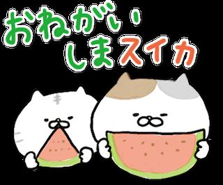 動く!にゃんこたち messages sticker-1