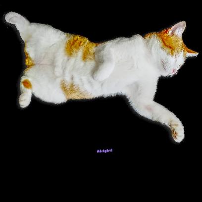 A fun cat message sticker messages sticker-10