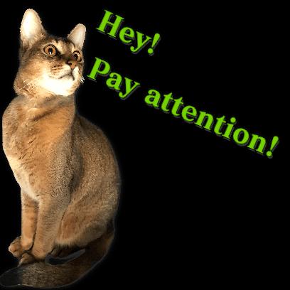 A fun cat message sticker messages sticker-4