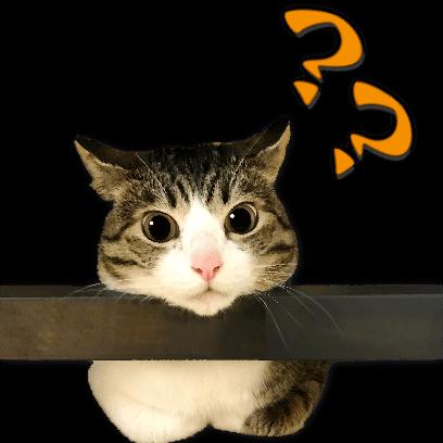 A fun cat message sticker messages sticker-2