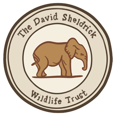 DSWT Baby Elephant Stickers messages sticker-5