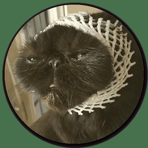 Stupid Cats messages sticker-10