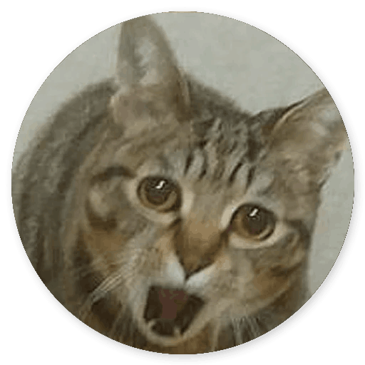 Stupid Cats messages sticker-9