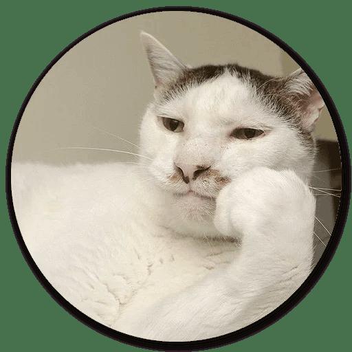 Stupid Cats messages sticker-5