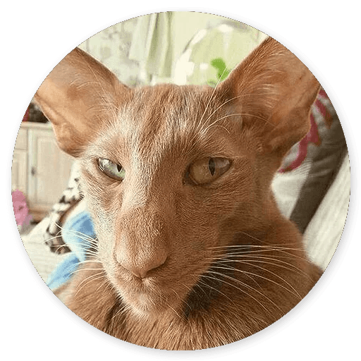Stupid Cats messages sticker-4