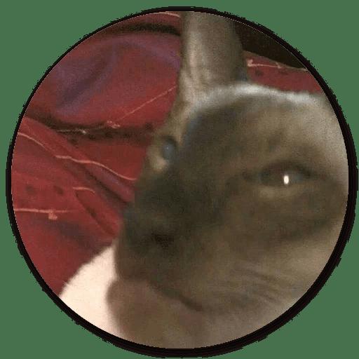 Stupid Cats messages sticker-11