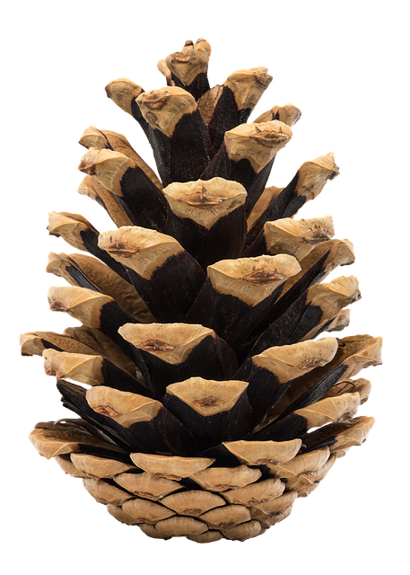 Pine Cone Stickers messages sticker-2