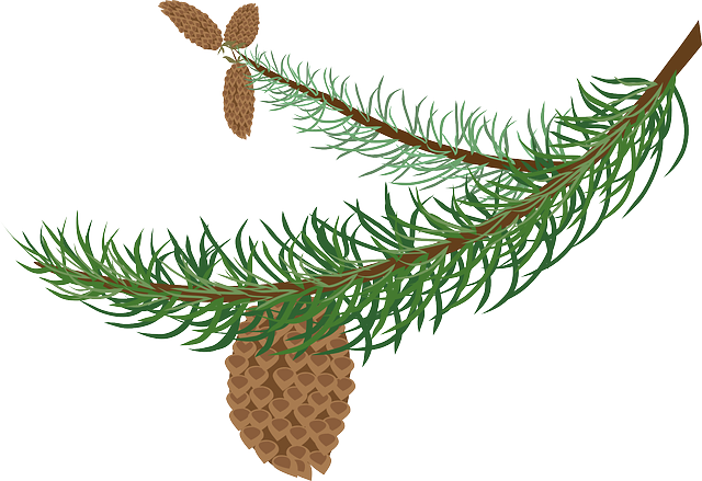 Pine Cone Stickers messages sticker-9