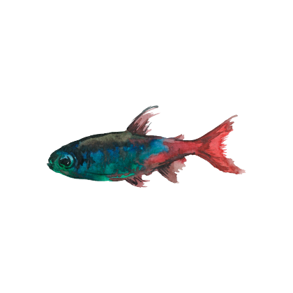 Magic Fish AR messages sticker-3