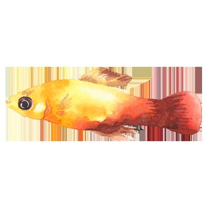 Magic Fish AR messages sticker-2