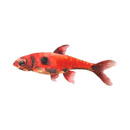 Magic Fish AR messages sticker-9