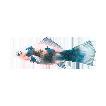 Magic Fish AR messages sticker-11