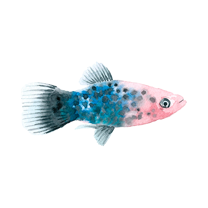 Magic Fish AR messages sticker-4