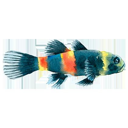 Magic Fish AR messages sticker-5