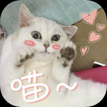 Icon喵~ messages sticker-8
