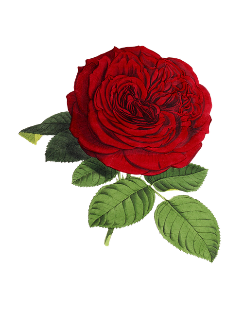 Roses Stickers messages sticker-0
