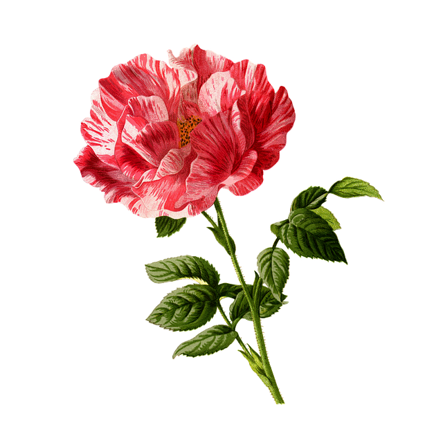 Roses Stickers messages sticker-2