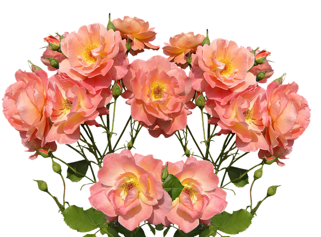 Roses Stickers messages sticker-10