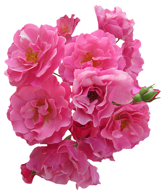 Roses Stickers messages sticker-4