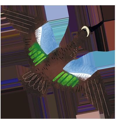 Texas Birds Sticker Pack messages sticker-5