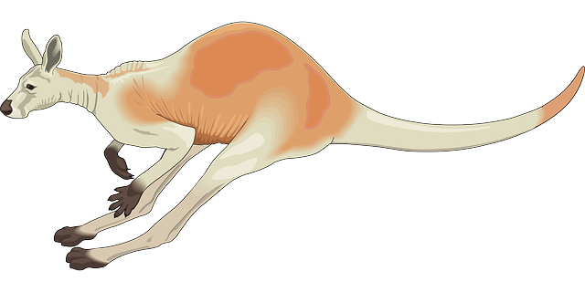Kangaroo Stickers messages sticker-8