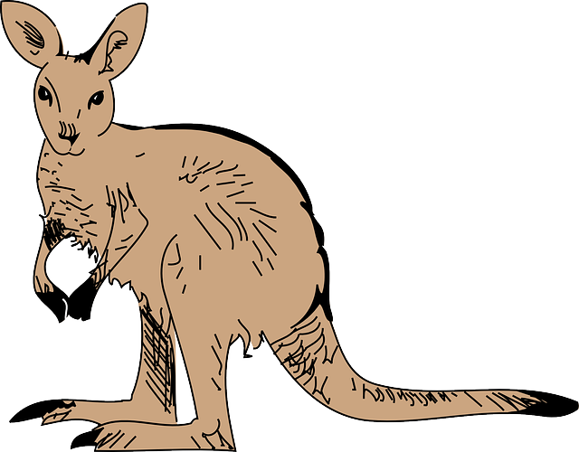 Kangaroo Stickers messages sticker-7