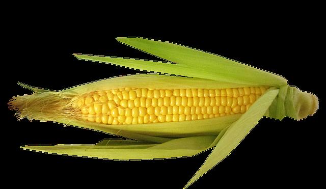 Corn Stickers messages sticker-9