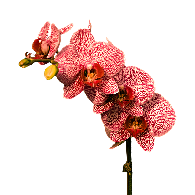Orchid Stickers messages sticker-11