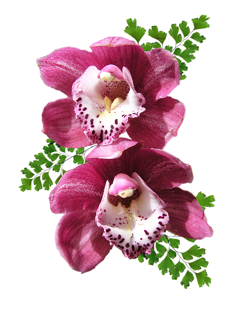 Orchid Stickers messages sticker-8