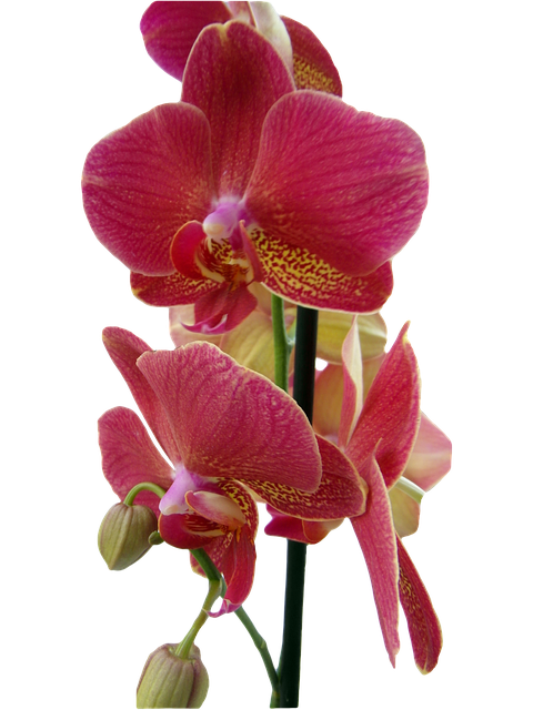 Orchid Stickers messages sticker-10