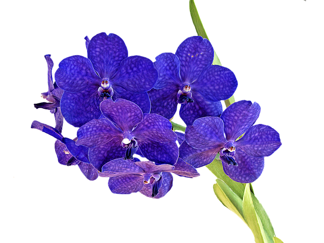 Orchid Stickers messages sticker-9