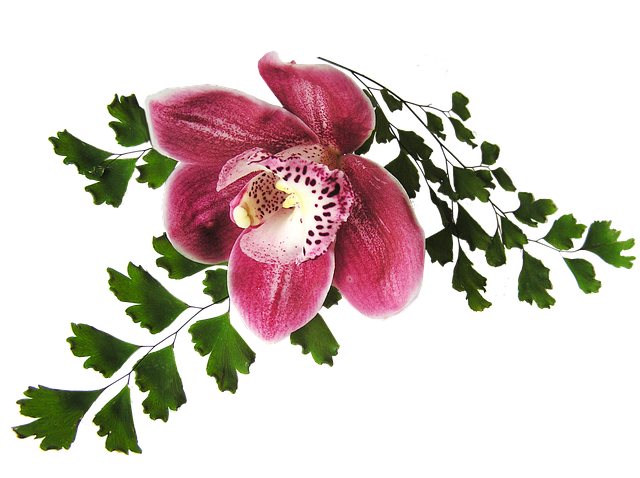 Orchid Stickers messages sticker-3