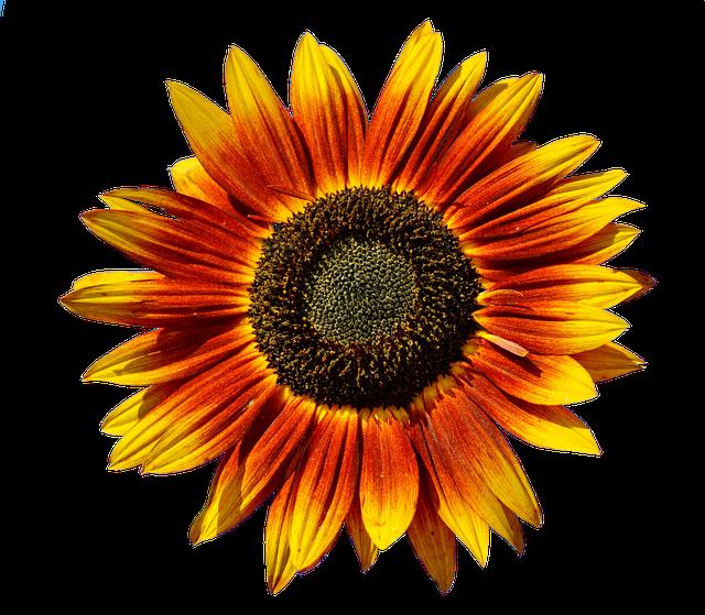 Sunflower Stickers messages sticker-6