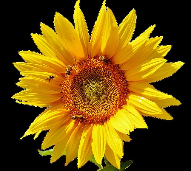Sunflower Stickers messages sticker-3