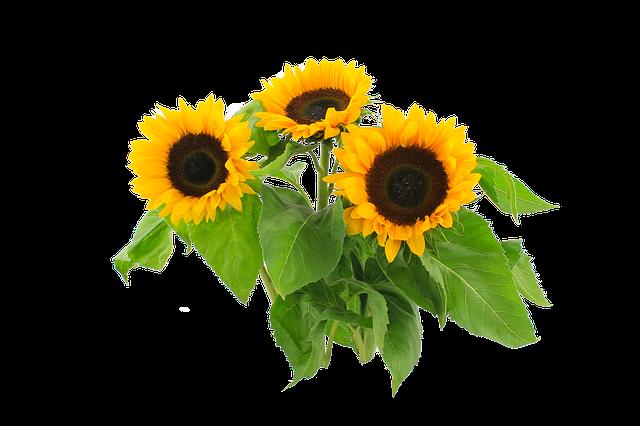Sunflower Stickers messages sticker-11