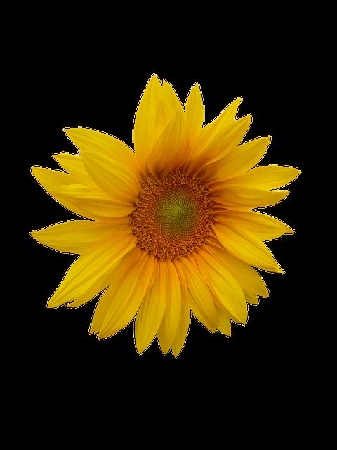 Sunflower Stickers messages sticker-9