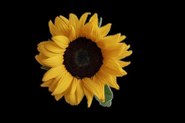 Sunflower Stickers messages sticker-8