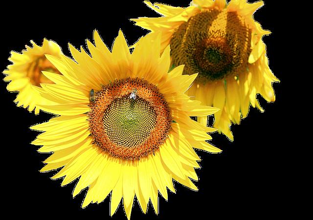 Sunflower Stickers messages sticker-10