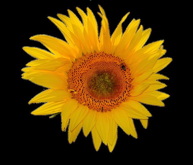 Sunflower Stickers messages sticker-5