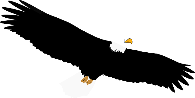 Exquisite Eagle Stickers messages sticker-9