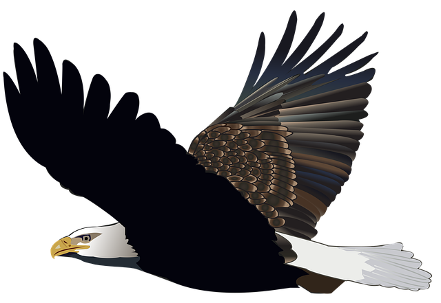 Exquisite Eagle Stickers messages sticker-6