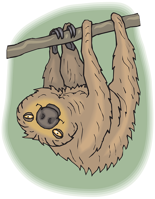 Slow Sloth Stickers messages sticker-6