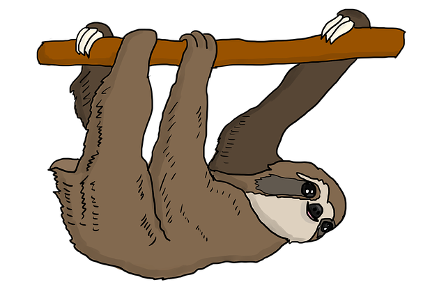 Slow Sloth Stickers messages sticker-1