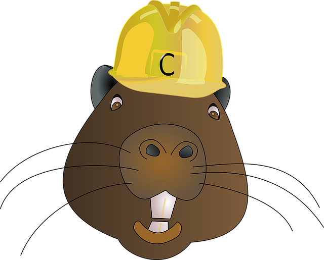 Best Beaver Stickers messages sticker-11