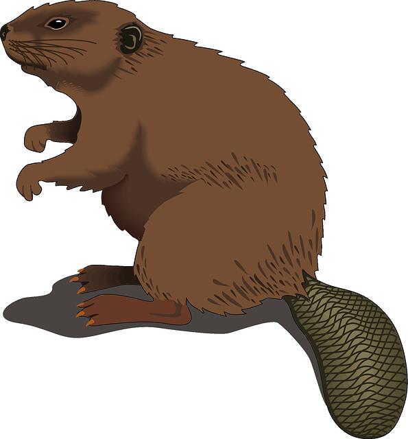 Best Beaver Stickers messages sticker-6