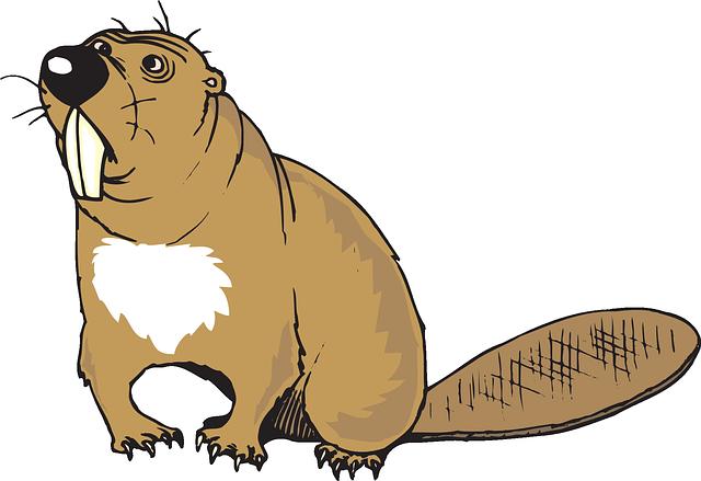 Best Beaver Stickers messages sticker-10