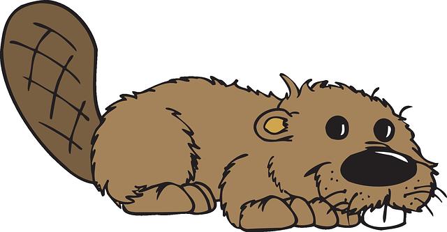 Best Beaver Stickers messages sticker-5