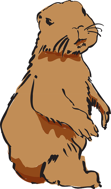 Best Beaver Stickers messages sticker-3